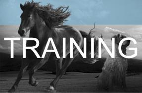 Training Pic